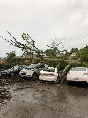 Tree traps woman in her car. Norwood Fire Department responded to free her.