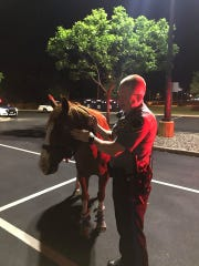 Toms River police captured a runaway horse on Route