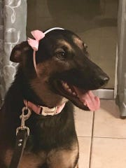 Kyra is the newest member of the Cocoa Police Department K9 unit.