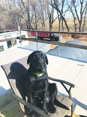 Buck is a much-loved companion of his owner Billy Studer, Pratt. When his dog disappeared recently, Studer feared the worst.