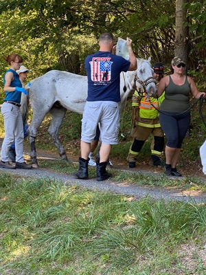 Emergency responders provide medical attention to a horse after it was rescued from a pond Sunday, July 5.