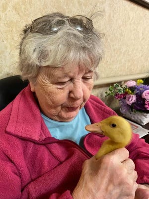 A resident at Foltsbrook Center for Nursing and Rehabilitation in Herkimer holds one of the ducklings that hatched out at the center this spring. SUBMITTED PHOTO