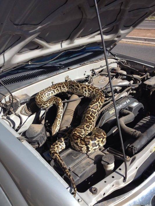 A Snake Under the Hood