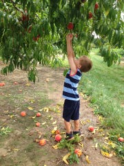 A pick-your-own farm adventure is a great way for children to connect with nature, says Marcia Mondelli, manager at Johnson's Farm in Medford.