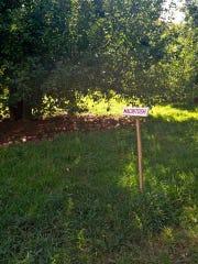 Riamede Farm grows 34 varieties of apples.