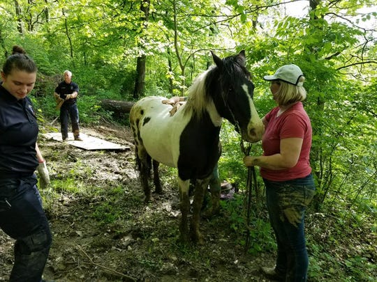 Springfield Township firefighters rescued a horse Tuesday night that slipped down a ravine with a rider.