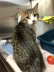 Spencer the cat was found in a box inside a dumpster in Ashwaubenon Tuesday. Elizabeth Bartlett was arrested in connection with the case.