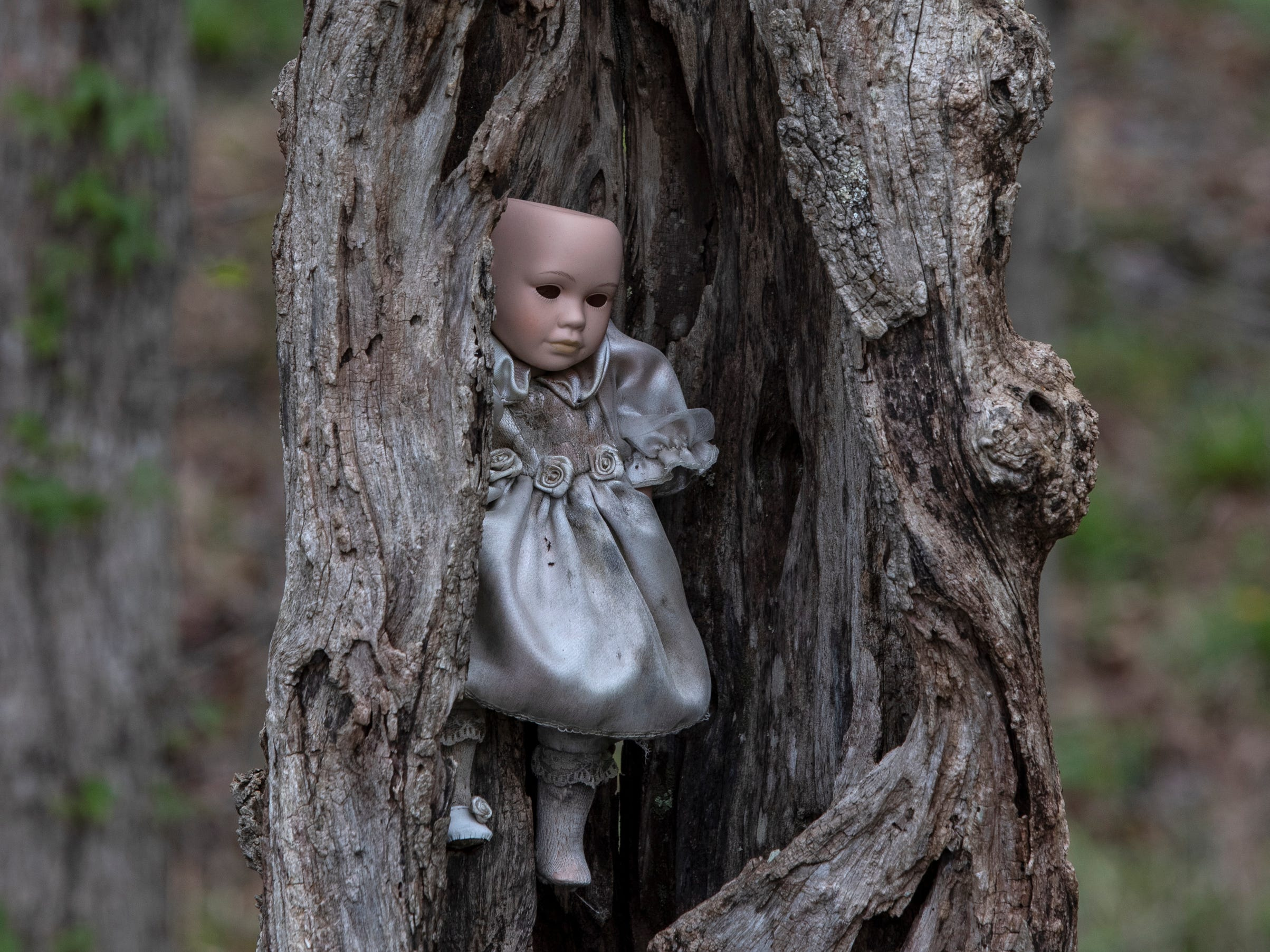 A baby doll lives in the remains of an old tree at the home for Wayward Babydolls. April 19, 2019.