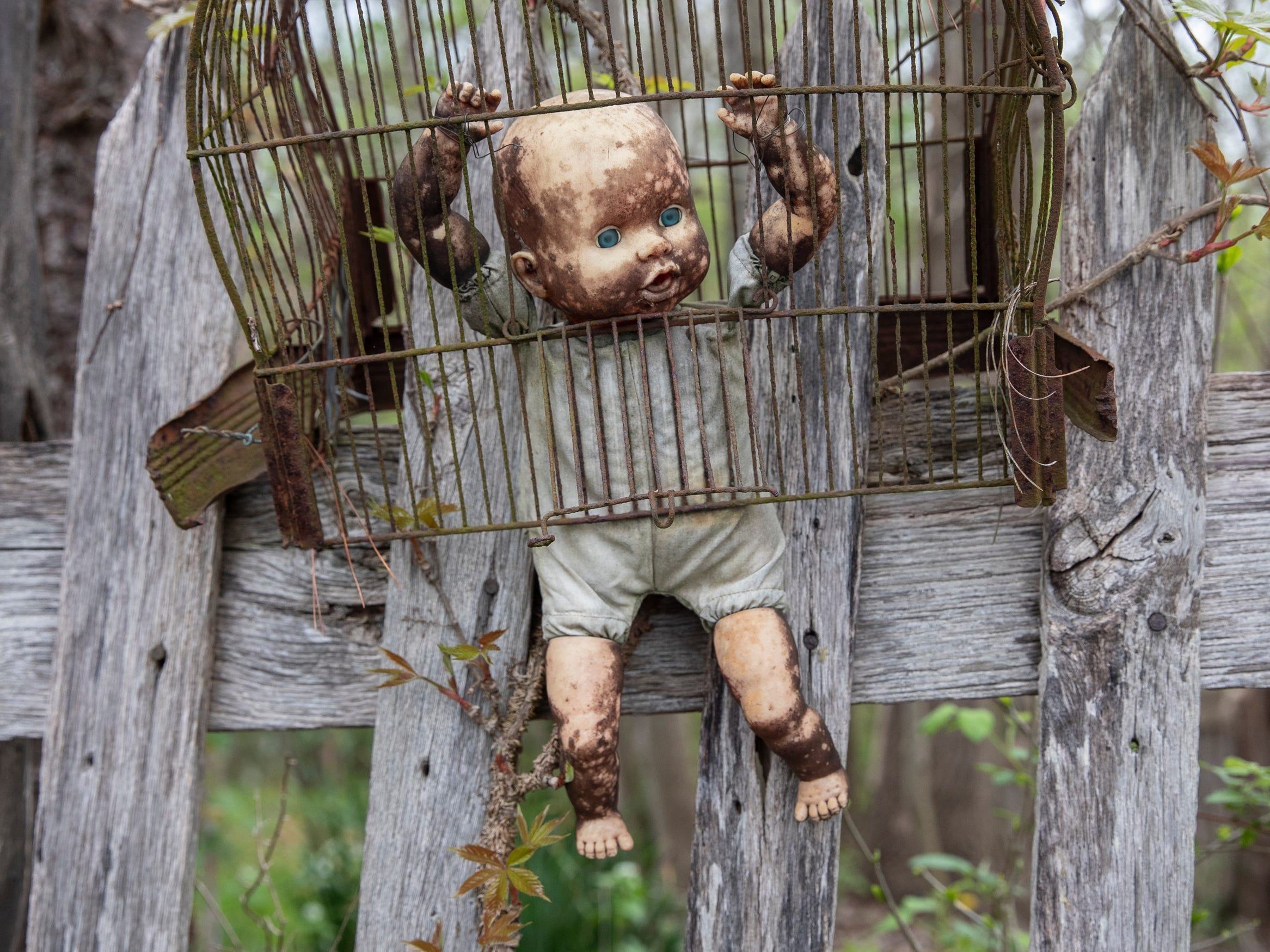 A doll resides in a cage at the home for Wayward Babydolls. April 19, 2019
