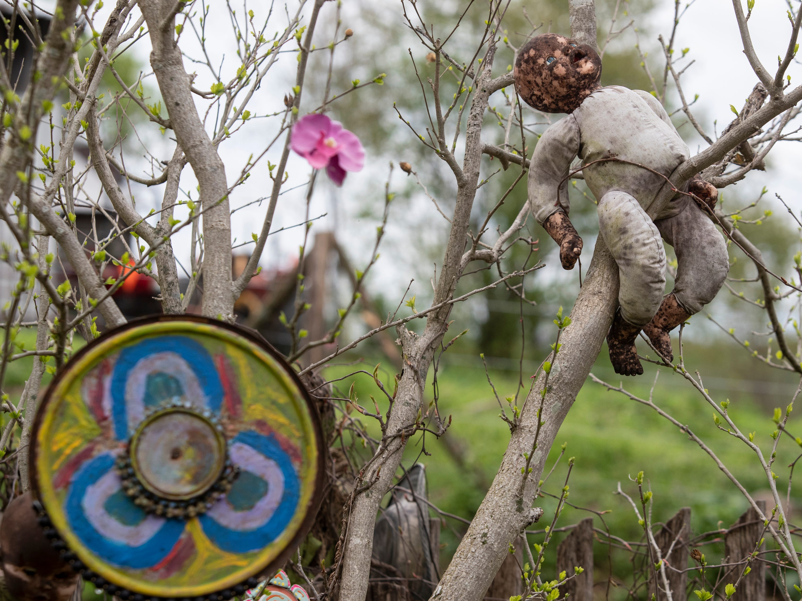 A baby doll sits in a bush at the Home for Wayward Babydolls. April 19, 2019.