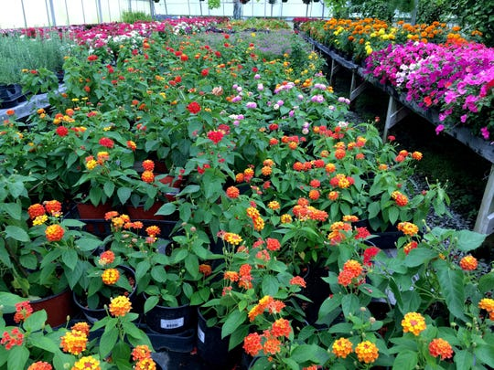 The buy one, get one free plant sale at Young's Nursery in Gallatin offers lots of good deals.