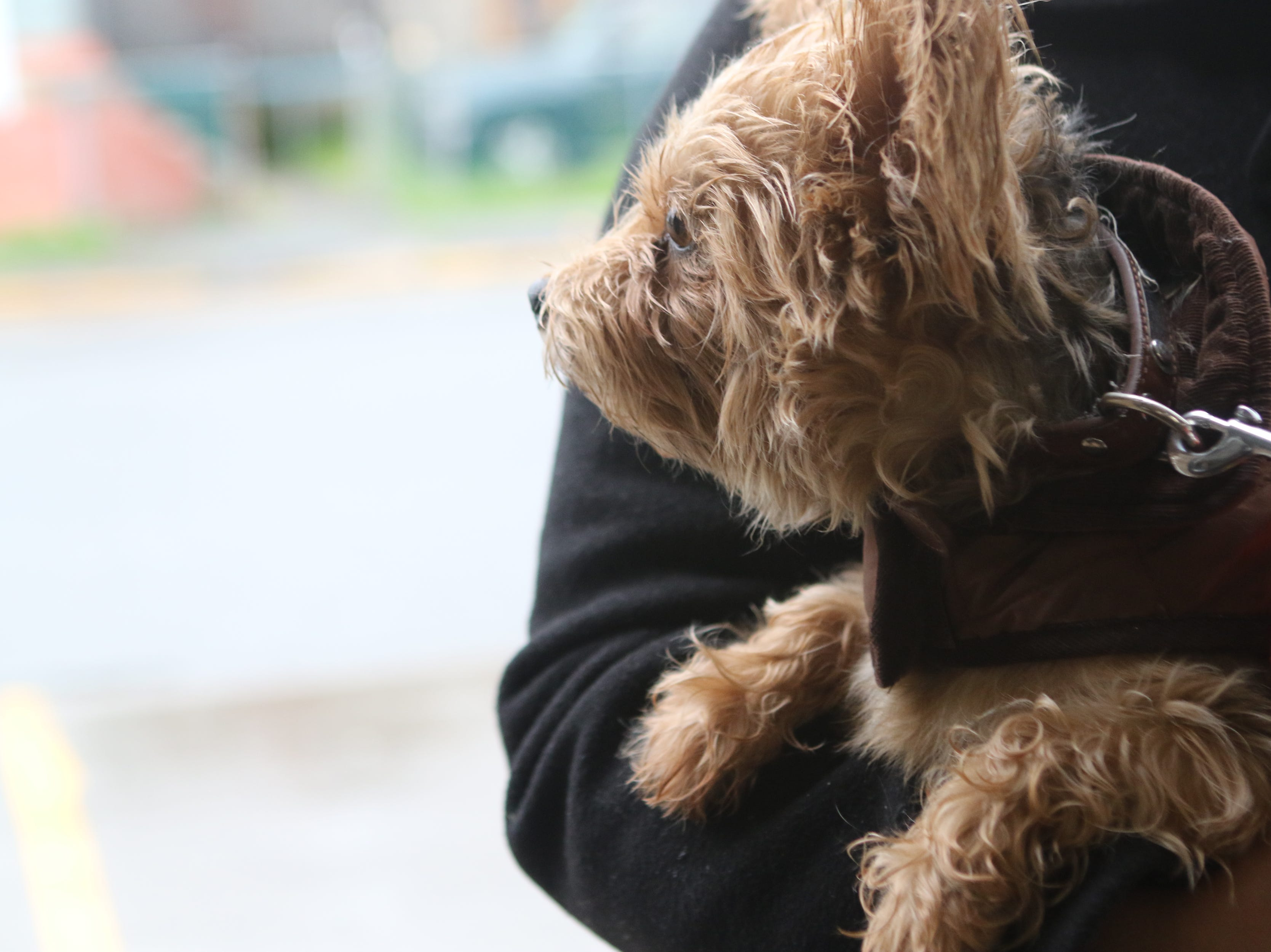 Approximately 1400 cats and dogs, including this one, are expected to get vaccinated for rabies at the 44th annual free Paterson clinic that runs through Sunday. Tuesday, May 14, 2019