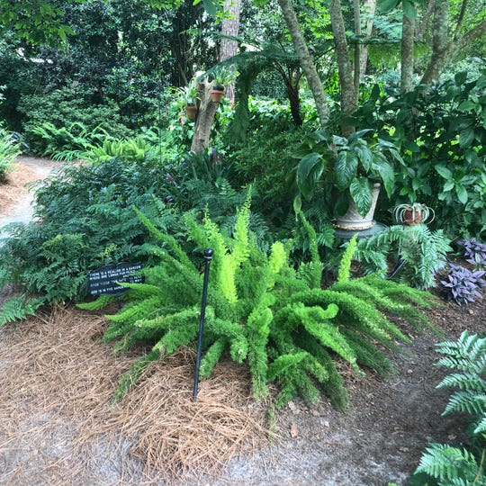 There are 35 species of ferns offering a variety of textures and colors.