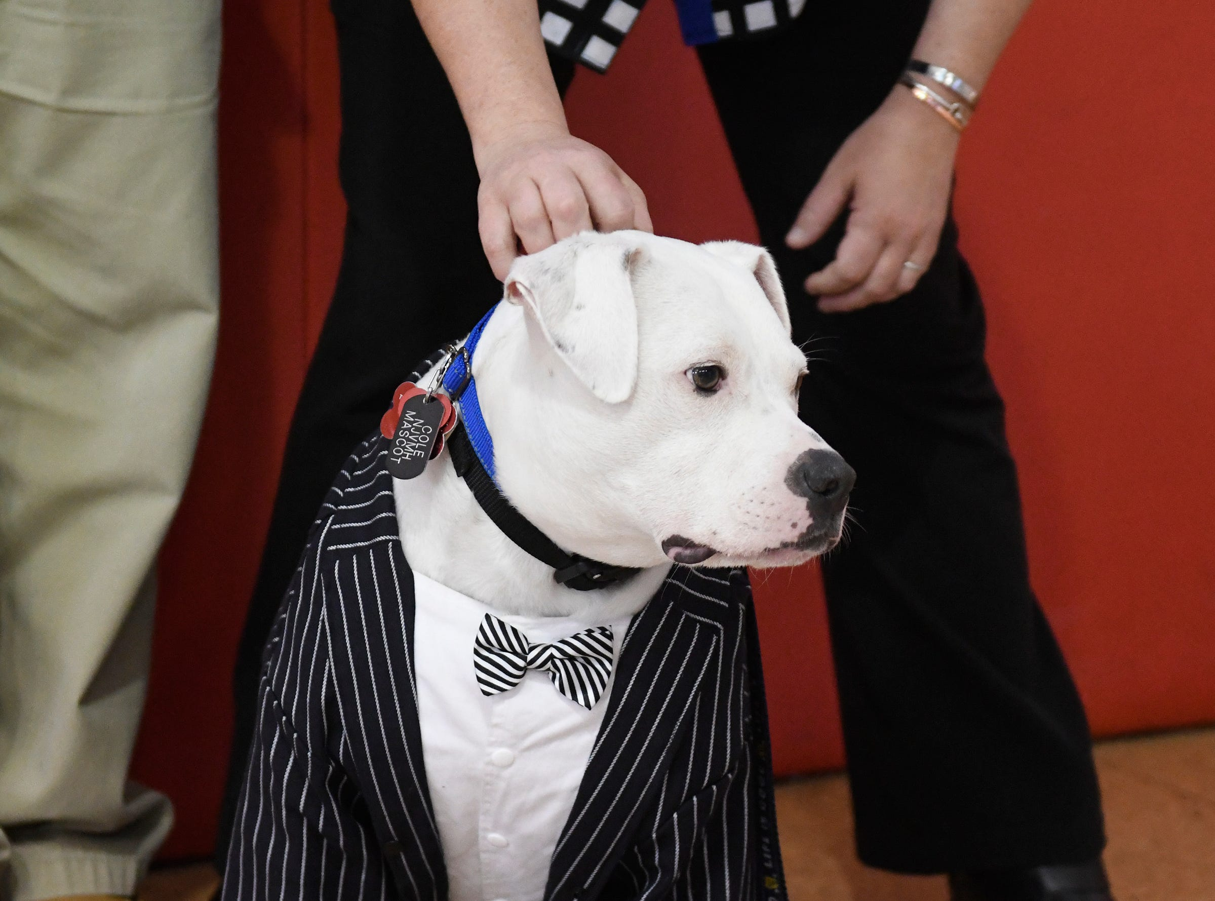 Mennies Elementary School therapy dog Cole attends the Giraffe Hero Award ceremony at the Vineland Public School District Administrative Offices on Wednesday, May 15, 2019.