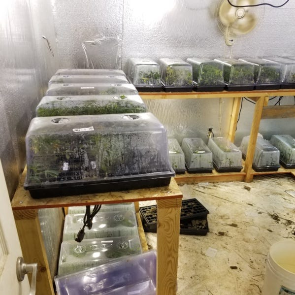 16 people arrested in large-scale Tulare County illegal marijuana grow