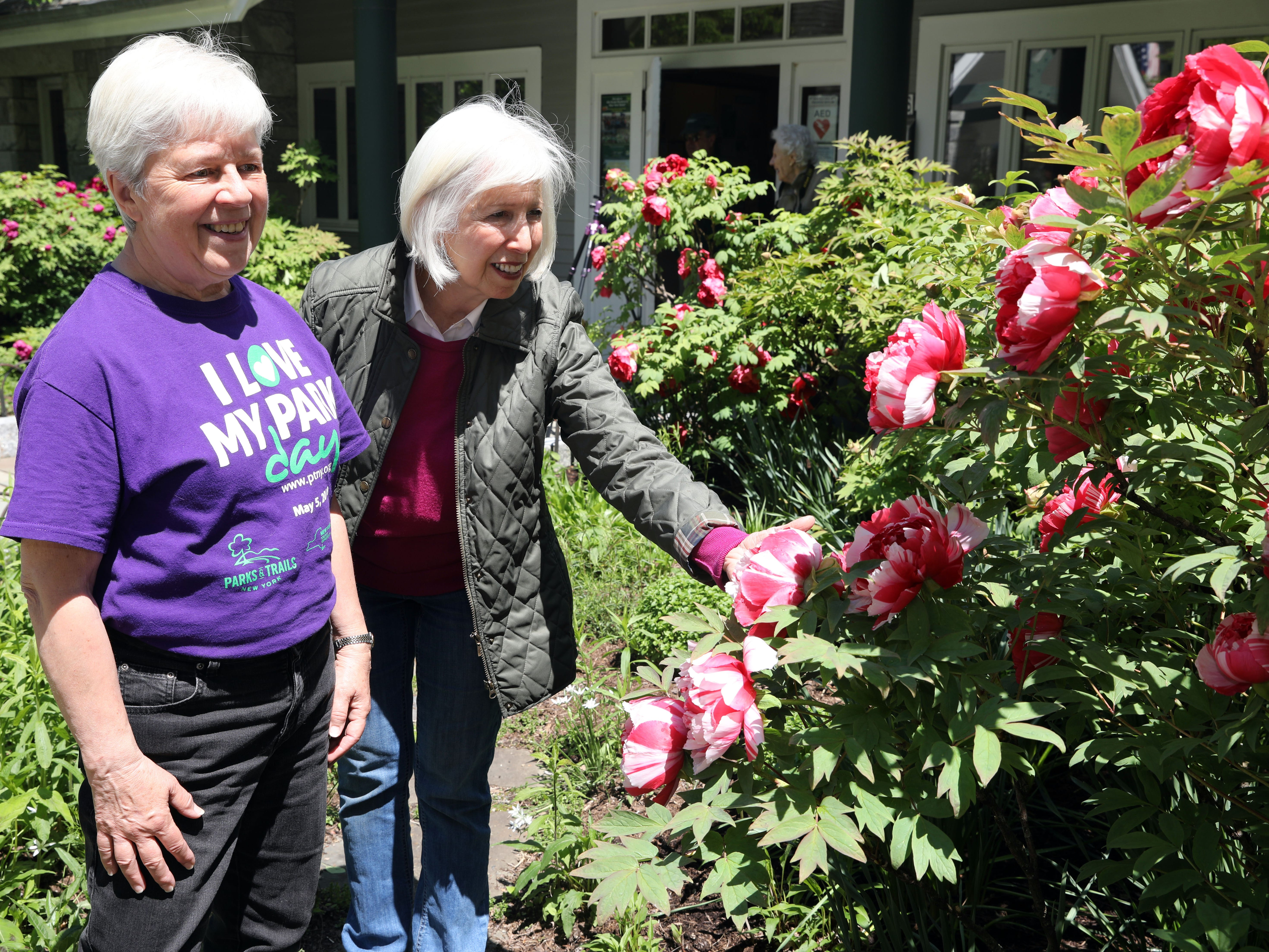 Volunteers Chris Davies, left, and JoAnn Stern, a master gardener, admire the peonies that are in full bloom, which will last another week, at Rockefeller State Park Preserve in Pleasantville May 15, 2019. The 500 tree plants were a gift from Yatsuka Cho, a small town in Japan, to the Friends of the Rockefeller State Park Preserve to help unite the two countries after September 11.