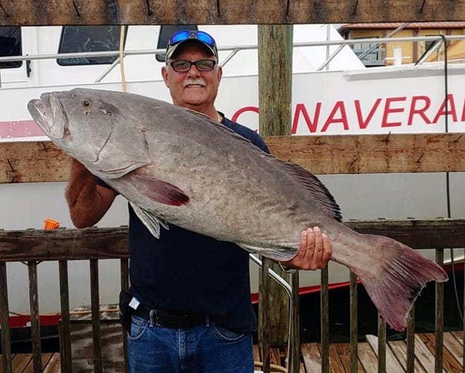 A 39-pound gag grouper was caught aboard the Orlando Princess party boat this week.