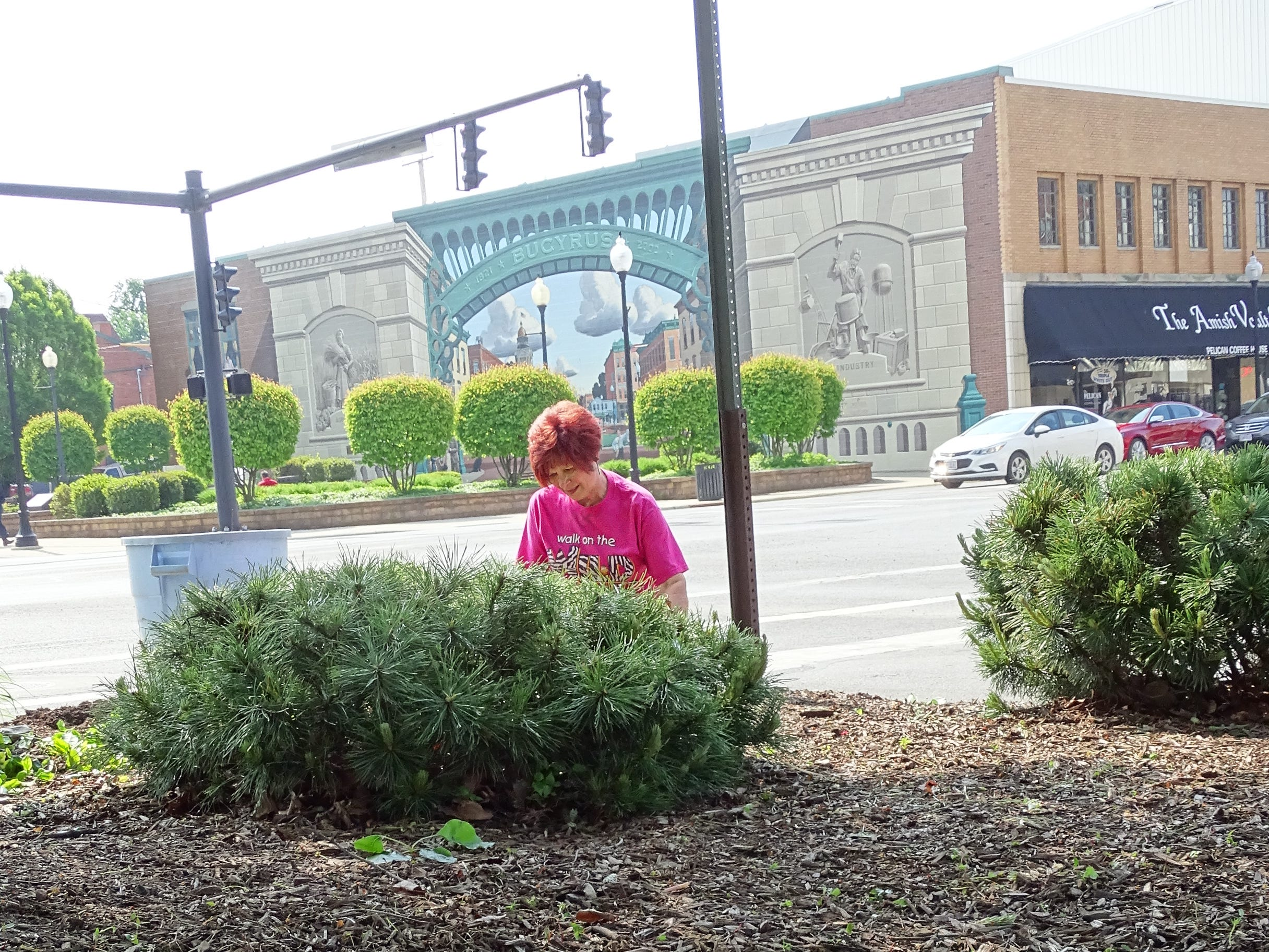 Shirley Chapman of Earth, Wind and Flowers Garden Club cleans up the landscaping at Washington Square in downtown Bucyrus on Thursday morning.