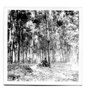 An unidentified soldier sits by a tree inside the Michelin rubber plantation. The plantation's vast acreage is where U.S. Army Sgt. Charles Clinton Fleek of Petersburg, Kentucky was killed May 27, 1969.