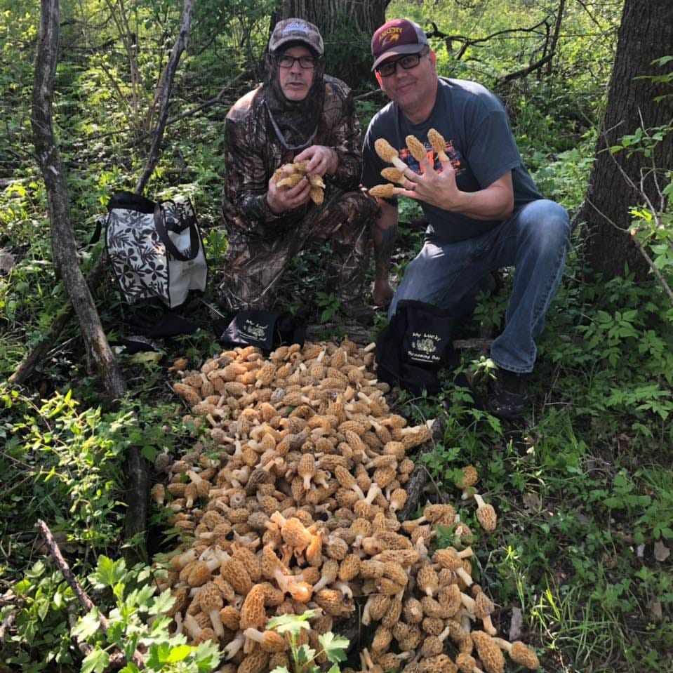 Monster morel hunt: Ankeny men gather nearly 50 pounds of morel mushrooms in one day