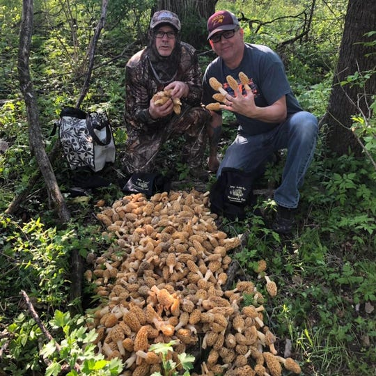 Ankeny friends Todd Whitman, left, and Steve Roberts show off the morels they found May 4, 2019, on private property near Ankeny.