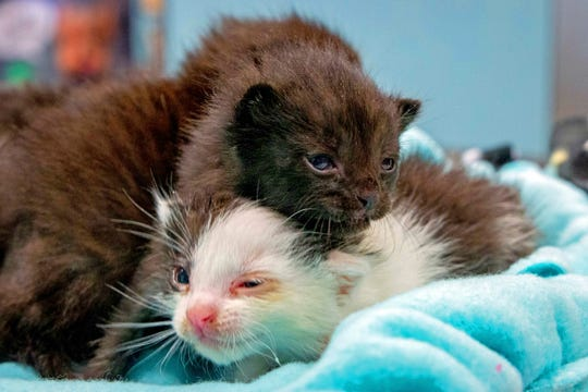 On April 24, construction workers heard meows coming from inside a 60-foot steel column. They tilted it and the week-old kittens slid out.