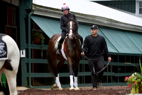 Preakness contender War of Will is led out of the barn for a practice run at Pimlico.