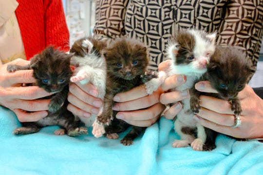 The kittens, found inside a 60-foot steel column,  have been given construction names: Crowbar, Rebar, Chisel, Jackhammer and Piper.