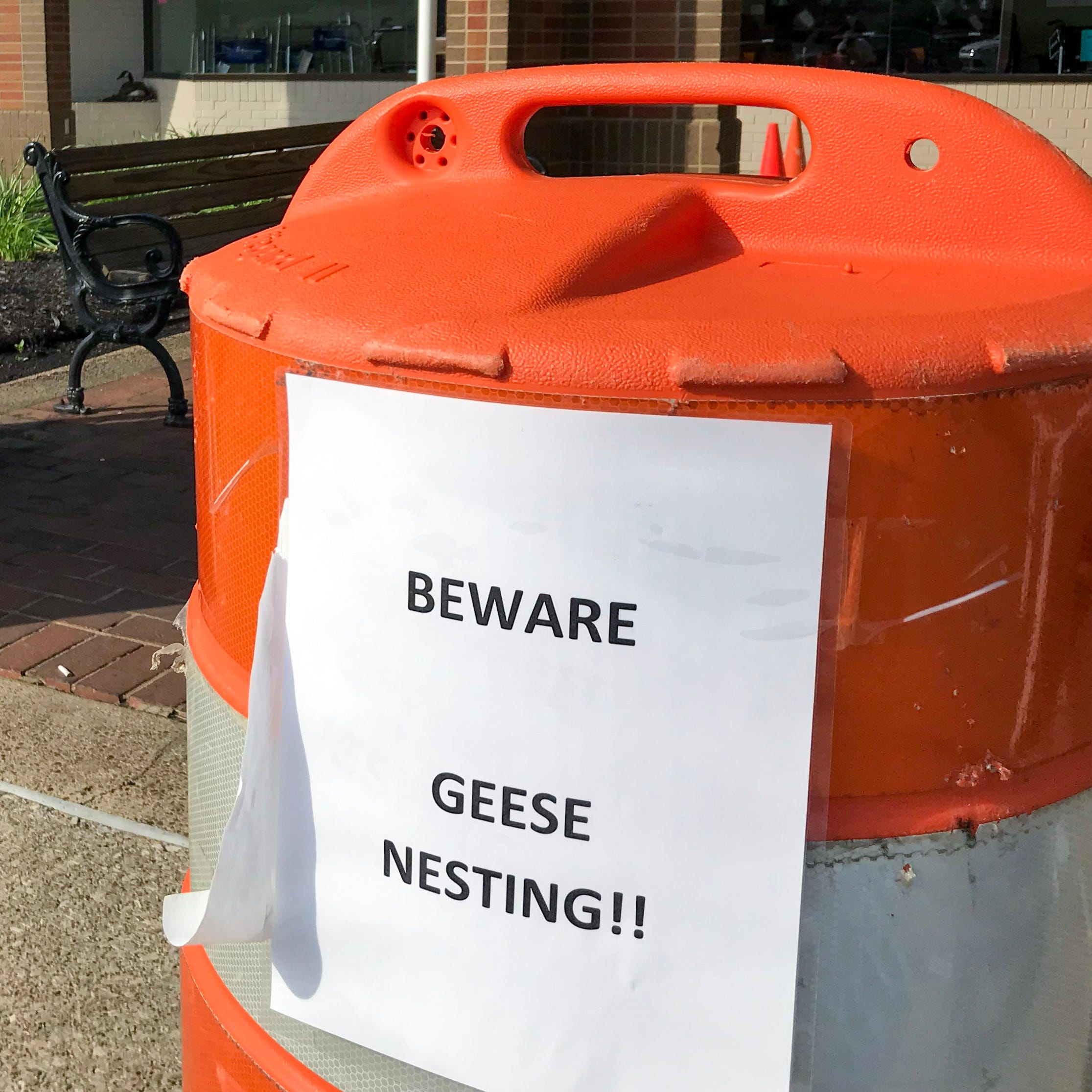 Goose poop and nesting season in Evansville: Tips for survival