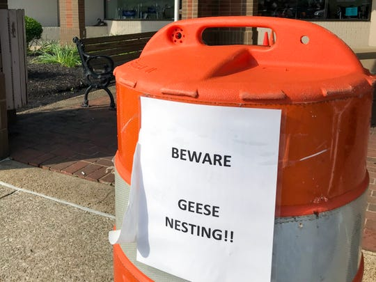 A sign posted warning customers of North Park Shopping Center about nearby nesting geese.