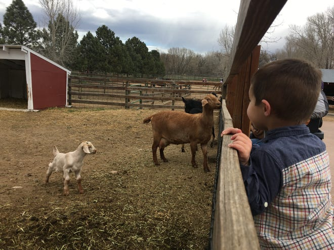 Sarah Kyle's son, Blake, watches a goat kid frolic during a recent visit to The Farm at Lee Martinez Park.