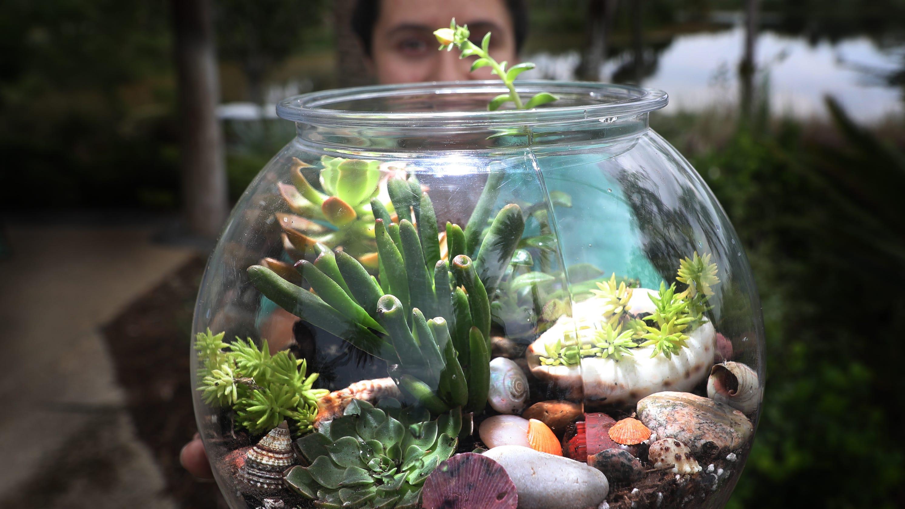 Learn How To Make A Terrarium More At Naples Botanical Garden