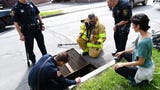 Ithaca police and firemen rescued ducklings from a storm drain after two Ithacans reported a mother duck pacing in distress near the drain.