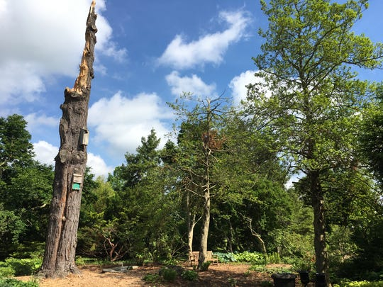 A tornado with winds over 100 mile per hour hit Yew Dell Botanical Gardens in mid-April.