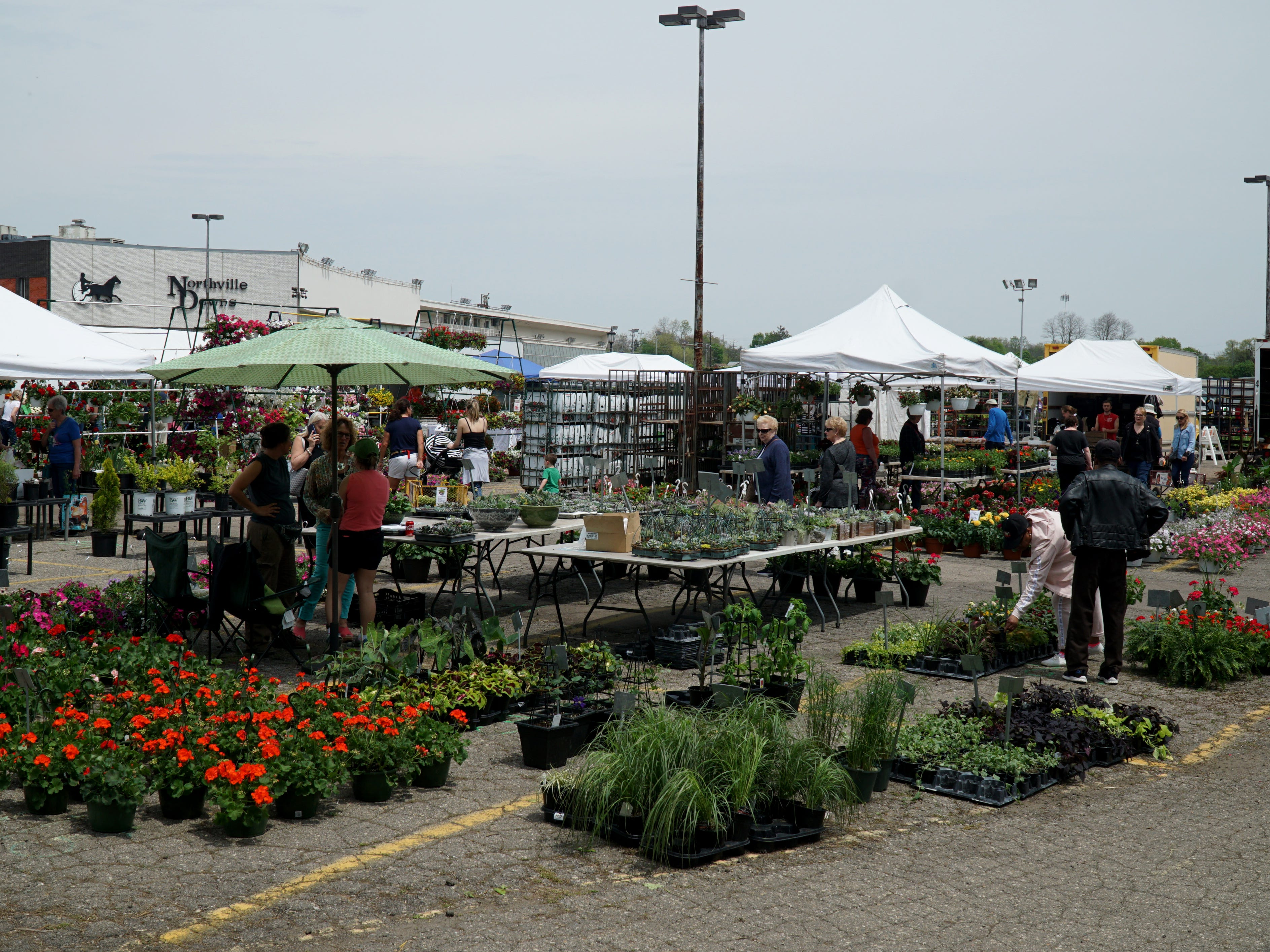Potted flowers and plants for sale at the May 16 farmers market.