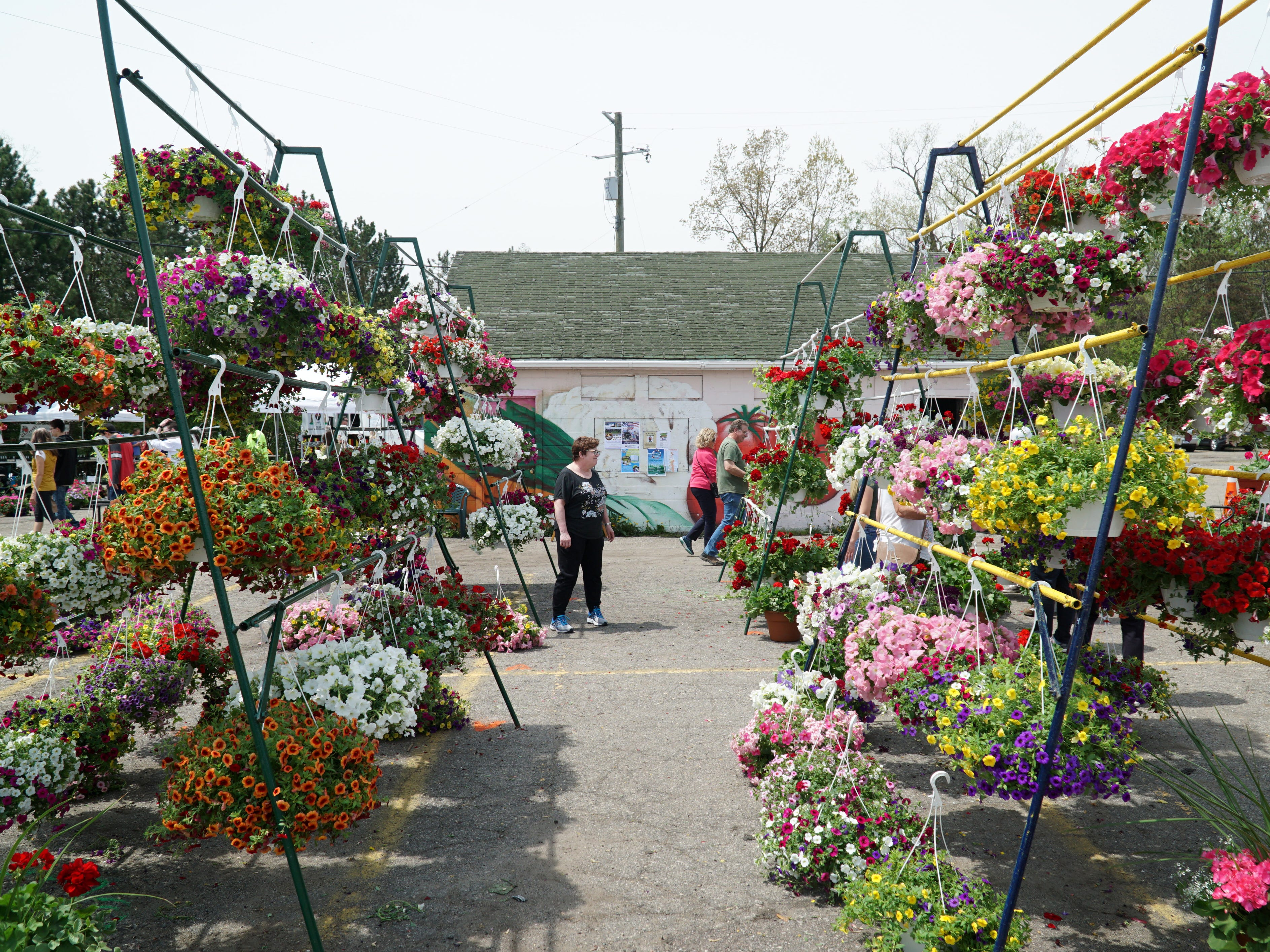 Two rows of hanging baskets for sale by a vendor at the Northville Farmers Market.