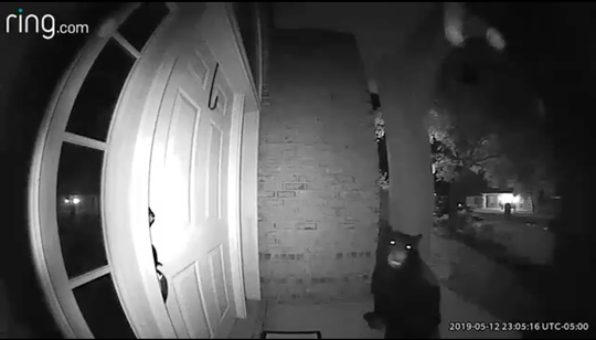 A screenshot from a Ring Doorbell video shows a black bear on Tina Sutton's front porch on May 12.