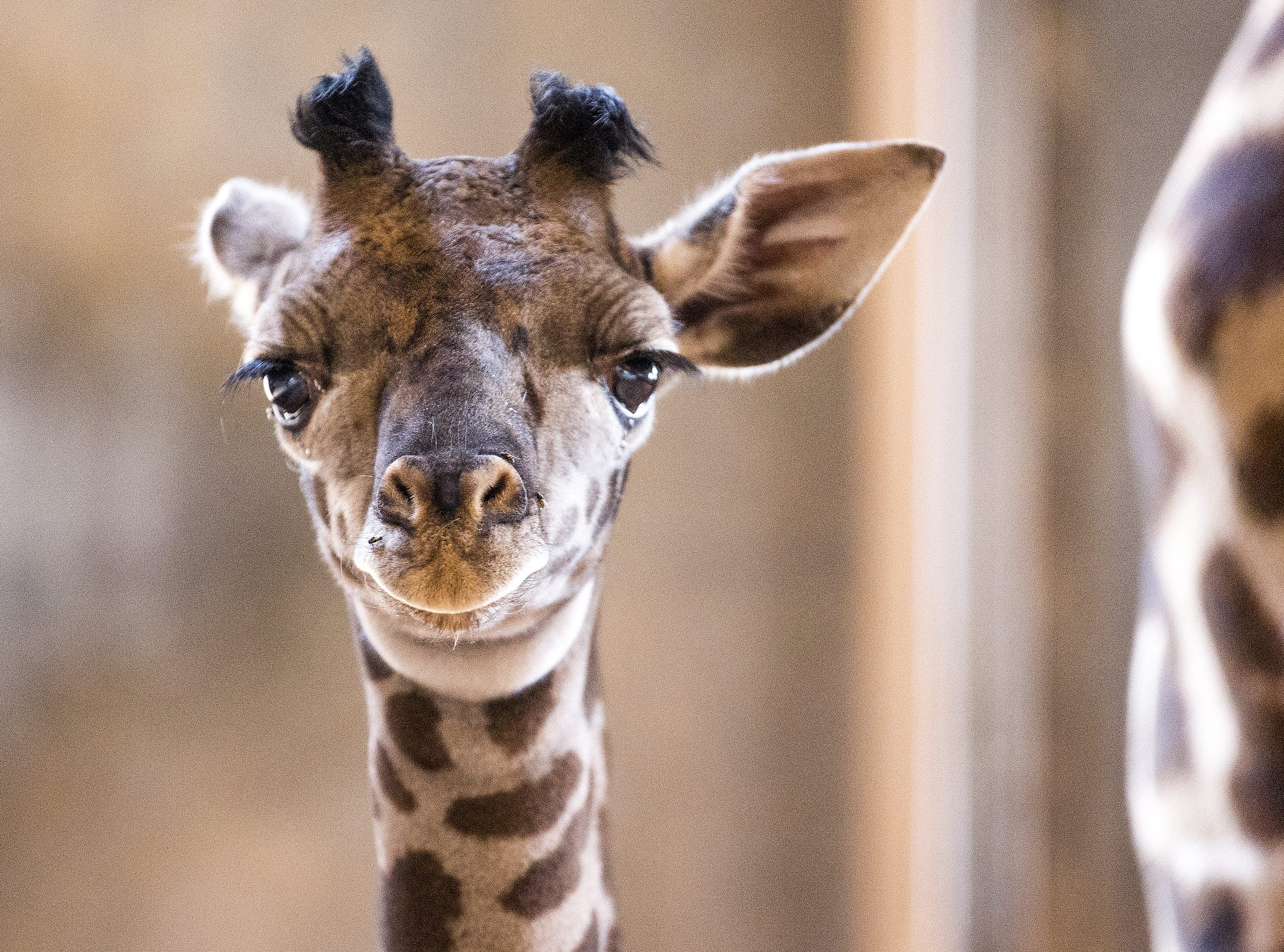VISIT THE PHOENIX ZOO: Aside from the typical zoo activities, the Phoenix Zoo offers extra opportunities for visitors to get up close with animals like giraffes and stingrays.