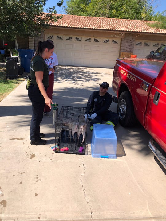 Phoenix fire and crisis crews on scene at a Laveen house fire treat two dogs that were found inside the home Thursday afternoon.