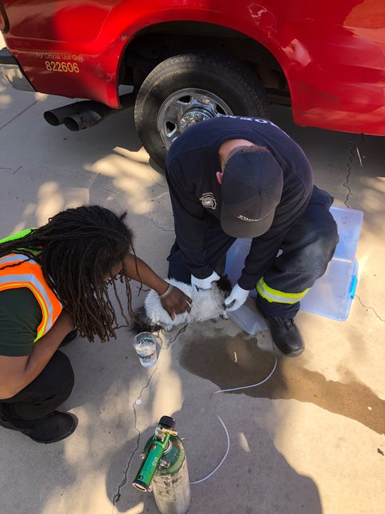 Phoenix fire and crisis crews on scene at a Laveen house fire treat a cat that was found inside the house Thursday afternoon.