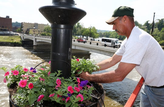 Brian Lear of Timber Run Gardens plans petunias and sweet alyssum in the baskets on the Y Bridge Thursday night. The baskets are maintained by the Muskingum Valley Garden Society, and planted with flowers grown in Timber Run's greenhouses. The society will be planting flowers in the planters downtown Tuesday and Wednesday evenings.