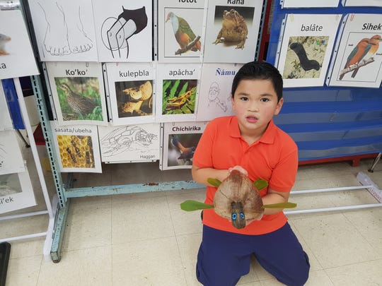 In conjunction with Sakkan (Mes) CHamoru and partaking in the Håfa Adai Pledge the students at M.U. Lujan Elementary school participated in the Coconut Family Project. They designed and decorated the coconuts using items at home. Pictured: Jaziah Smith, second grade.