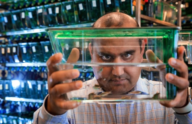 Oklahoma Medical Research Foundation's Dr. Gaurav Varshney is shown Dec. 3, 2019, in his lab in Oklahoma City with a tank of zebra fish that he has used to become one of the nation's top researchers using the gene-editing technology CRISPR, that is revolutionizing the biosciences. [Chris Landsberger/The Oklahoman Archives]