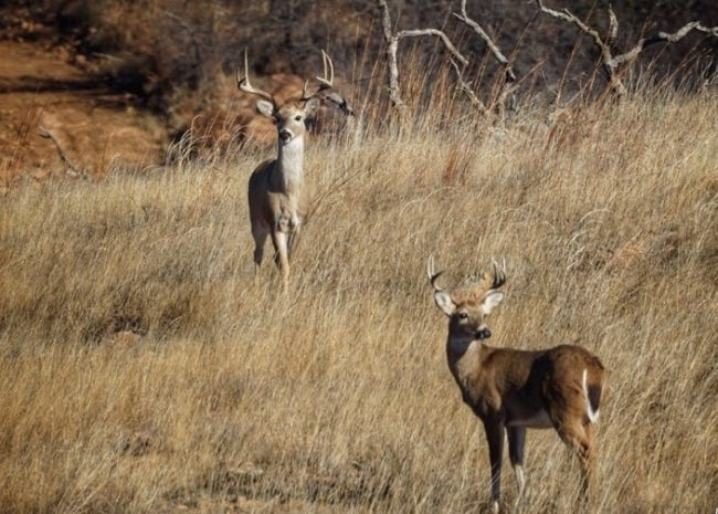 Oklahoma's 16-day deer gun season, the most popular hunting season in the state, opens Nov. 21. [PHOTO PROVIDED]