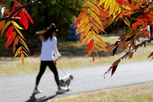 A woman walks her dog past fall foliage Friday at Bluff Creek Park in Oklahoma City. [Bryan Terry/The Oklahoman]
