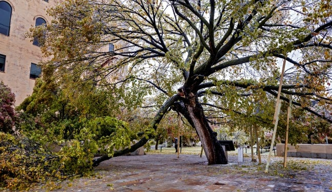A limb sits broken on the Survivor Tree at the Oklahoma City National Memorial & Museum. [Chris Landsberger/The Oklahoman]