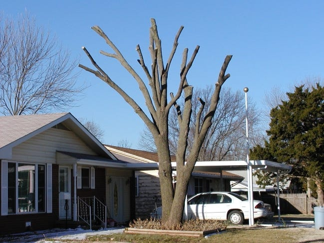 """A tree """"dehorned"""" after severe ice damage. [PHOTO PROVIDED]"""