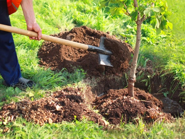 Fall is the time to plant trees. [PHOTO PROVIDED]