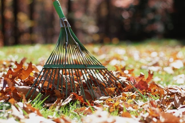If you don't like the look of layered or blowing leaves, consider collecting them into a compost pile contained by wire, wood or plastic walls. [Metro Creative Connection]
