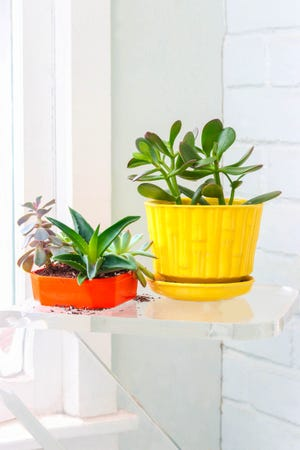 When looking for a holiday gifts for colleagues, you could go to your local hardware store or nursery and find a small succulent that the recipient can keep on their desk. They require little maintenance and can be a nice visual reminder to the recipient of your appreciation. [MetroCreative image]